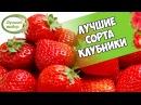 Хитсад ТВ КЛУБНИКА Лучшие сорта которые не нужно пересаживать 8 лет 🍓 обзор семян