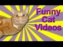 Funny Cat Videos - Dubstep Cat, Dancing Cats, Rapping Cat