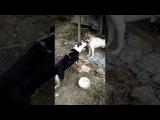 En diciembre hasta en los animales hay felicidad Poza Rica - Veracruz - MX