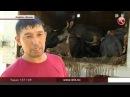 Бір жапырақ қағаздың болмауынан 5 миллион теңге желге ұшты