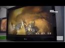Эндоскопия у утки с кишечной непроходимостью Endoscopia en pato Obstrucción en el tracto digestivo