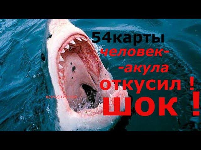 ЧЕЛОВЕК-АКУЛА ! ОТКУСИЛ ! 54 карты (колода карт) a shark-man , a mighty man ,strongman