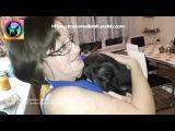 Щенок из приюта знакомится с новым домом Этот фильм должен посмотреть каждый puppy...