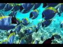 Вершины большинства коралловых рифов и подводная естественная жизнь в мире