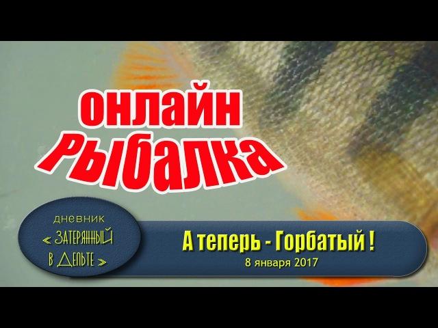 Астраханская рыбалка онлайн. Подводная съемка. Окунь балансир