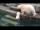 Шилка купается Новосибирск Зоопарк