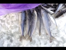 Видеоотчёт о рыбалке Банновская протока 10 12 17 г