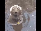 Что смотришь не тобик я, а тюлень