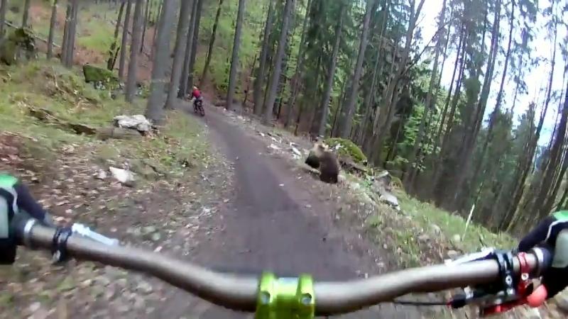 Велосипедист снял на видео, как медведь преследует его друга