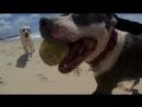Счастливые собаки и кот из Австралии. Клип на песню Фаррелла Уильямса HAPPY