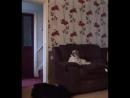 Собака потерялась