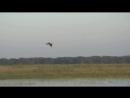 Охота на утку.