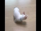 Маленький котей