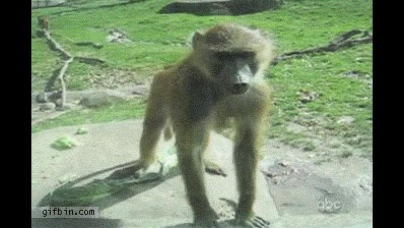 обезьяна показывает попу. Юмор «Какаду- смешочки», причуды, позитив. vk.com/kakadusmechocki