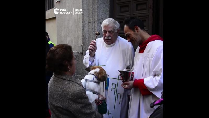 Священники благословили животных в Мадриде