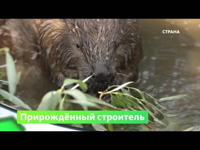 Воронежский биосферный заповедник   Природа   Телеканал