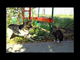 Страшнее  кошки - зверя нет !