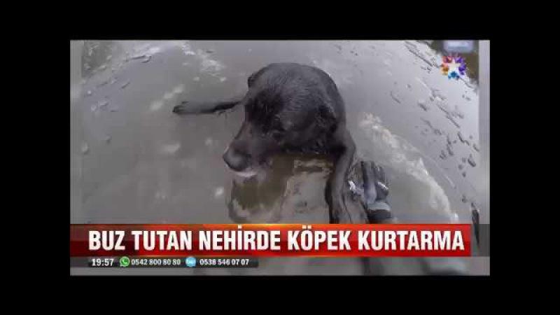 Buz tutan nehirde gücü tükenen köpeği kurtaran kadın itfaiyeci