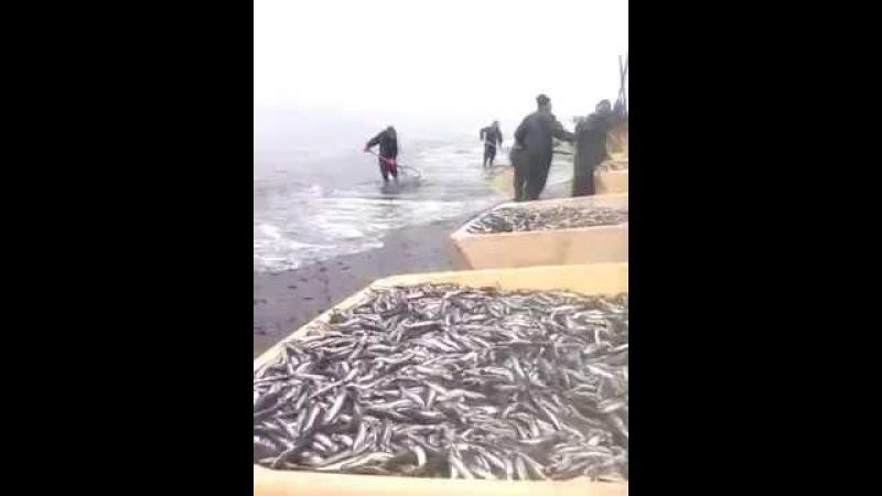 Рыба тоннами. Дары моря. Клондайк для коммерсантов