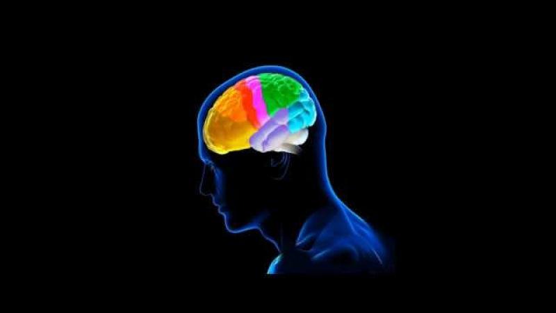 Мышление и мозг рассказывает Андрей Курпатов