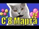 С 8 Марта музыкальная открытка поздравление прикольное видео поздравления с женским днём на 8 марта