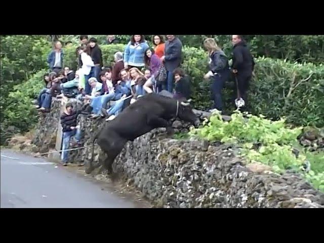 Komik Boğa Saldırısı, funny bull attack, 面白い雄牛攻撃, अजीब बैल के हमले, смешно нападение б ...