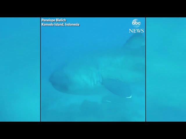 Diver encounters rare megamouth shark