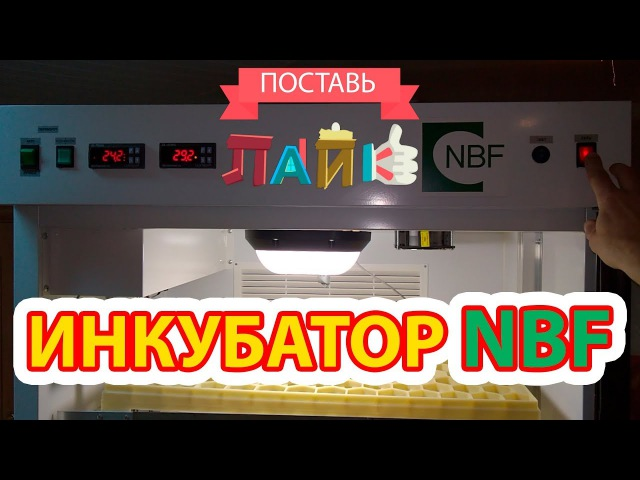 Инкубатор NBF