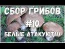 Сбор грибов 10 Белые грибы Лисички Подберёзовики Лес Жизнь в деревне