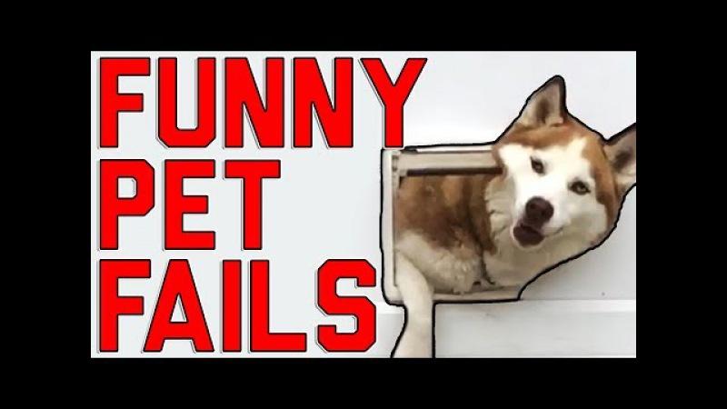 Funny Pet Fails Lock The Doggy Door! (August 2017)    FailArmy