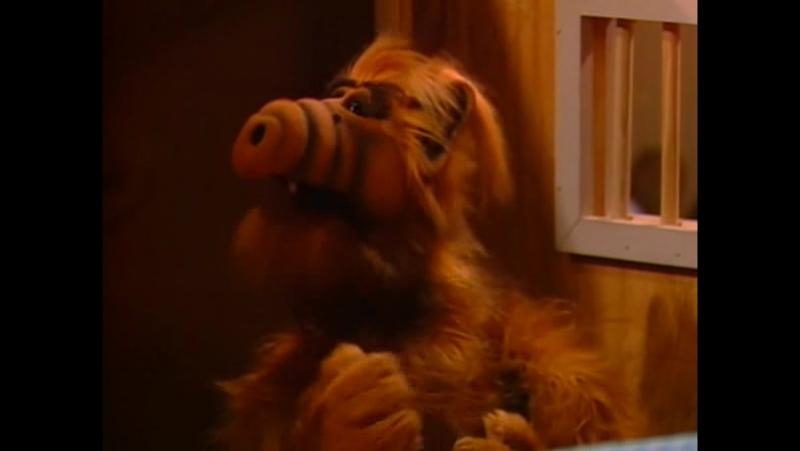 Alf Quote Season 1 Episode 19_Альф и Брайан