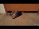 жидкий кот!