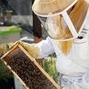 Пчеловодство Вконтакте