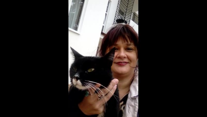 Кабардинский кот..)