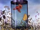 Бабочка 1972 Андрей Хржановский мультфильм «Союзмультфильм»