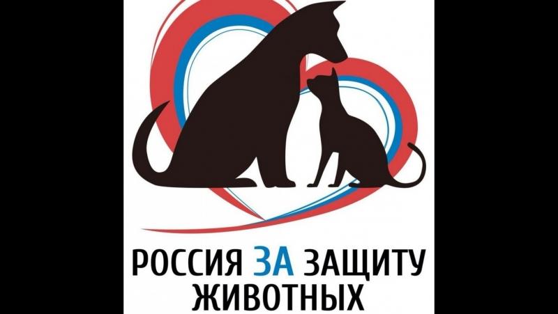 Правила есть, ответственности нет: Москва остро нуждается в законе о животных