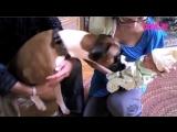 Собаки знакомятся с новорожденными детьми
