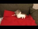 Крысиный реслинг