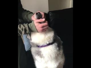 Когда пёс не хочет лечиться