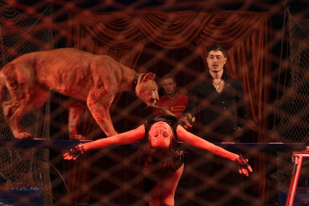 цирк Аврора, чайковский район, 2019 год