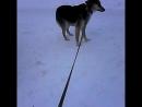 Раечка на прогулке