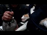 Спасение кота в Волгограде