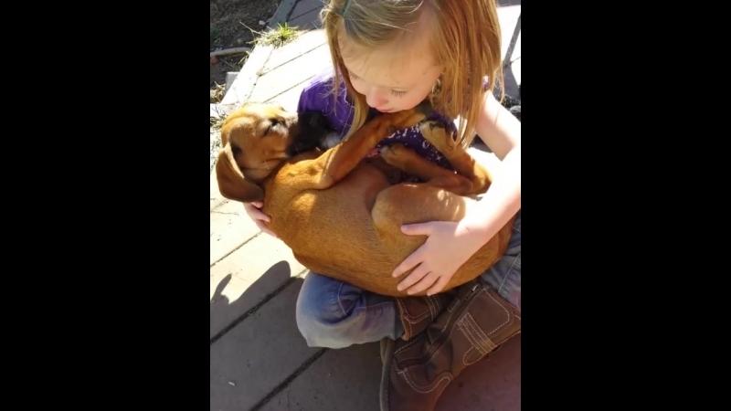 Девочка спела колыбельную собаке из приюта