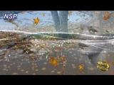 ValGoldfish  - ТАМ ГДЕ КЛЁН ШУМИТ