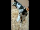 Армия милых котиков наступают