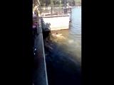 Донецк, парень спасает тонущего котенка