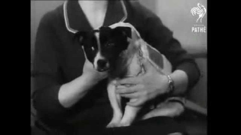 Silent video: Ugolyok and Veterok (Cosmos 110) - 1966
