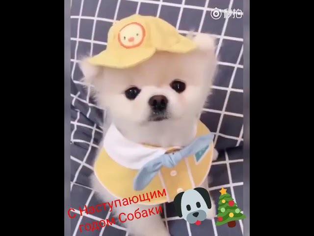 С Наступающим Годом Собаки