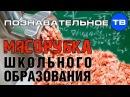 Мясорубка школьного образования Познавательное ТВ Артём Войтенков