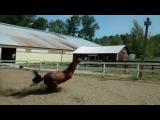 Horse dab (re httpcoub.comview108fzd)